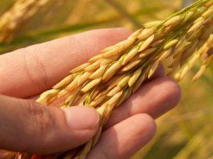 декларация соответствия на зерно