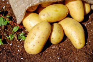 сертификат качества на картофель