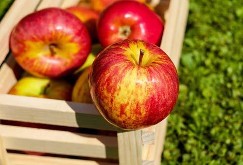 Сертификат на яблоки